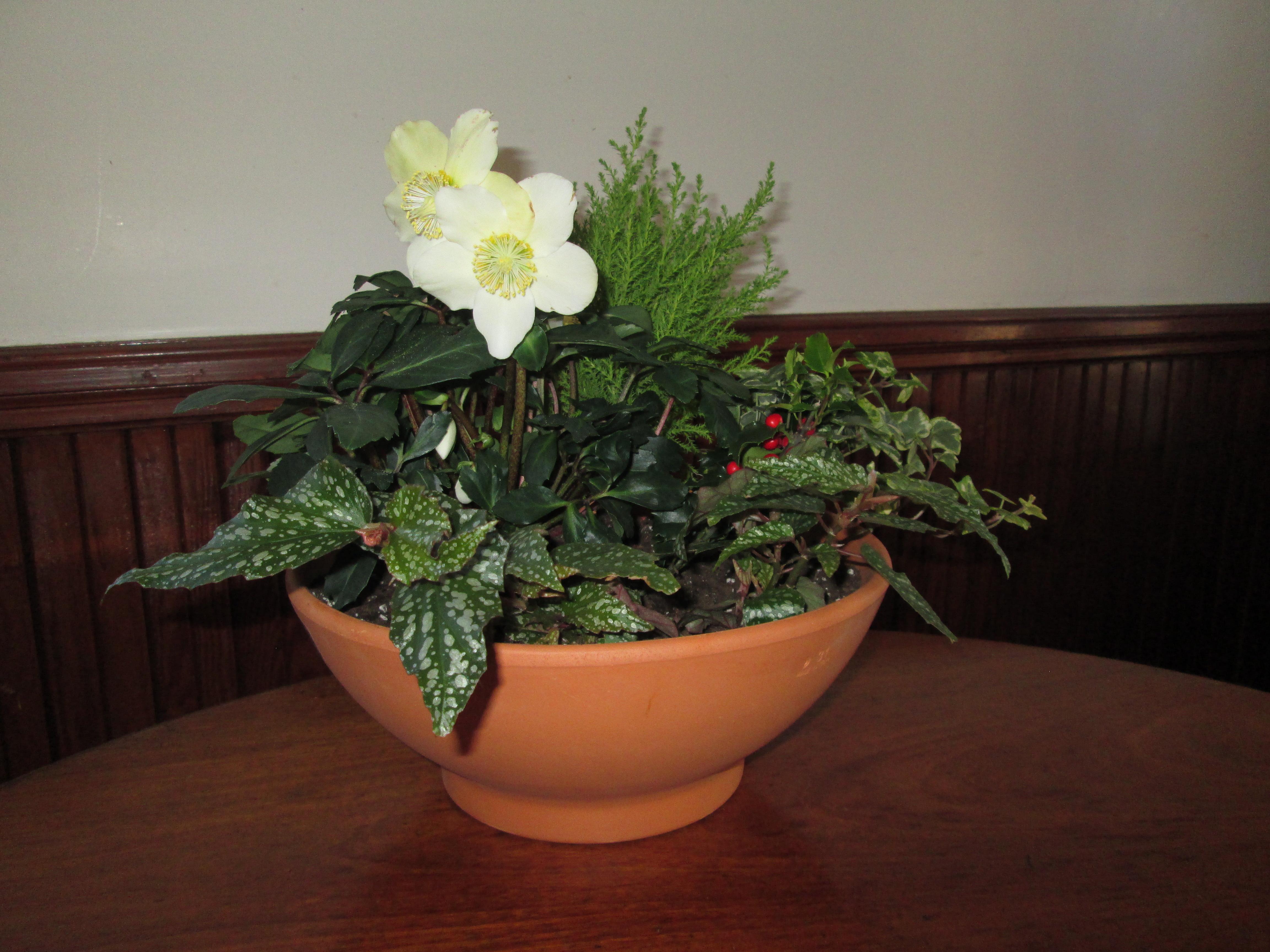 Winter plants terra cotta pot arrangement 12.14